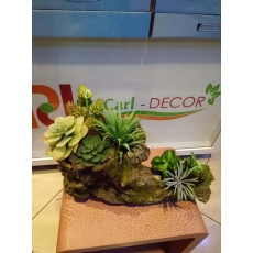 Decorative Succulent