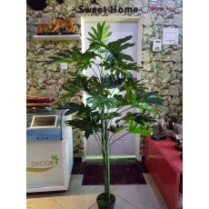 Philodendron Tree